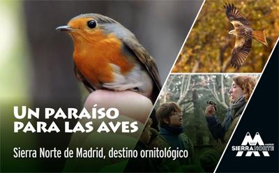Imagenornitologia-1