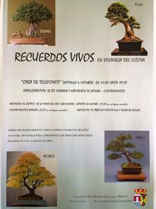 Villaviejabonsai15