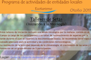 ElCuadronSetas15