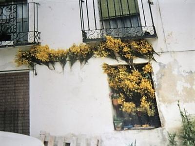 MontejoRetama17