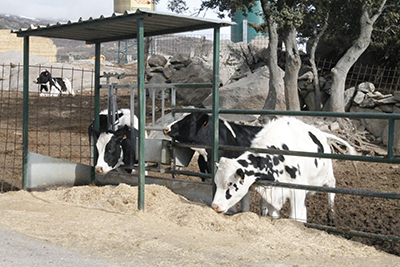 Vacas65