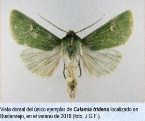 BustarMariposafeb20