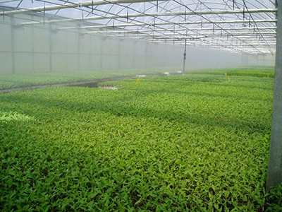 PlantonesComunidad04abr